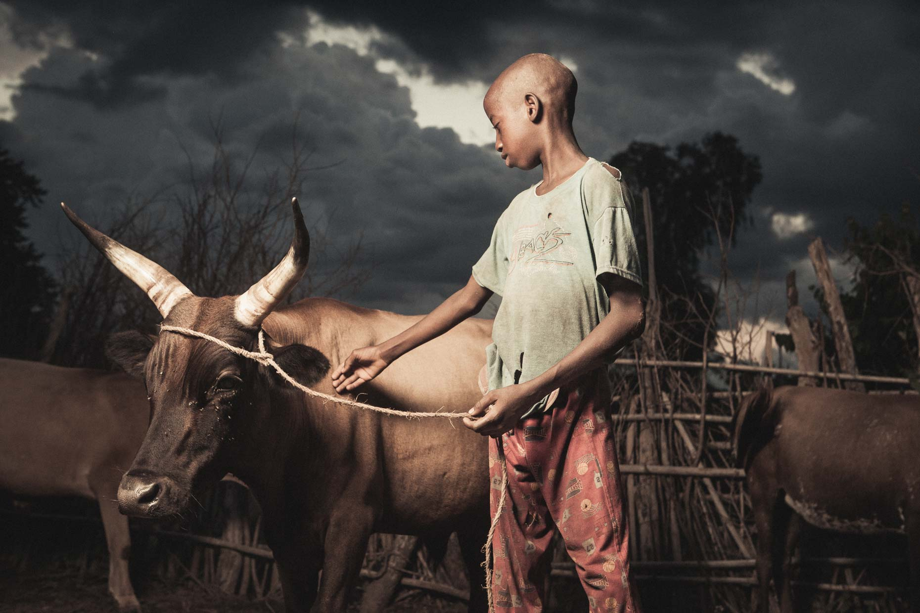 Salam Barry (Boy with Cattle #2 )